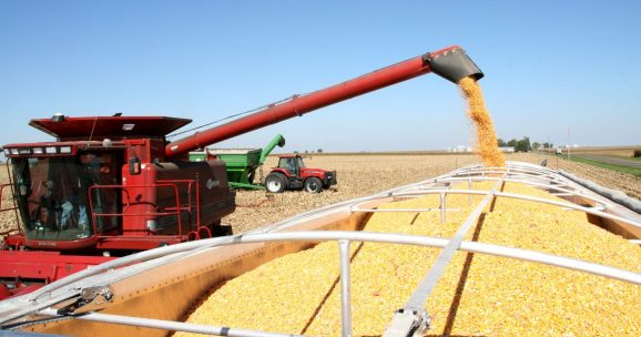 "Romania to register ""excellent"" maize crop this year amid concerns regarding EU production; wheat quality seen unsatisfactory"