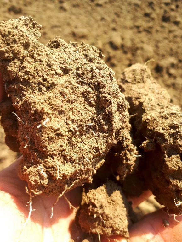 Bio Farm land – Pământ – terra
