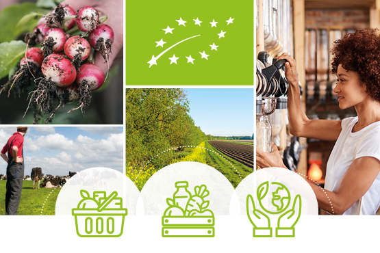 Action plan for organic production in the EU: is Romania ready?