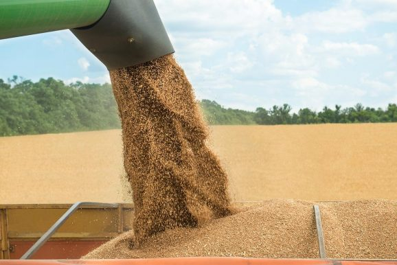 USDA: Romania's wheat crop to rise by 58% in 2021